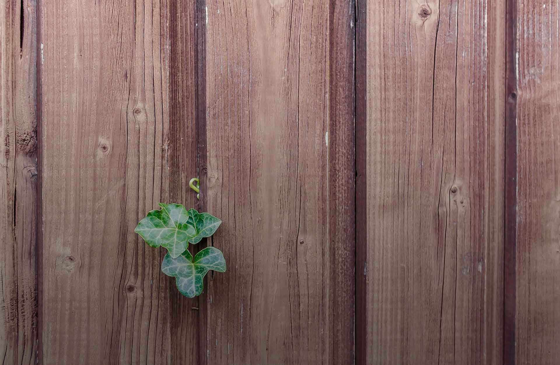 wood-ivy-fence-xsm.jpg
